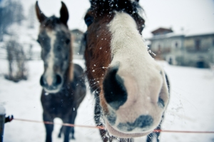 Horses, Valle Maira Cuneo, Italy