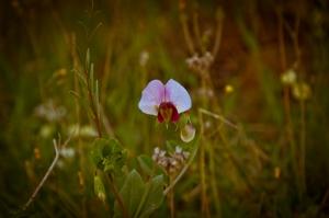 Wildflowers - Spring
