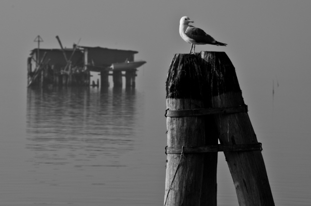 Seagull in the Venetian lagoon