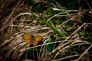Butterfly in the wood