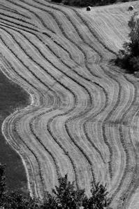 Hay lines, Apennine - Italy